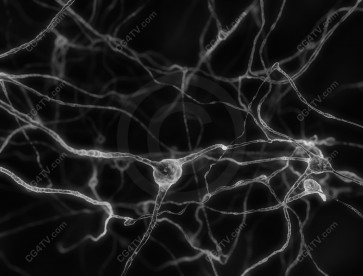 Neurons - Nerve Cells Black & White Image