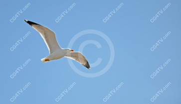 Seagull Photo high resolution