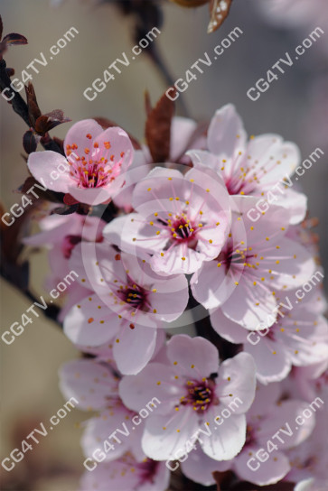Spring Blossoms Photo high resolution