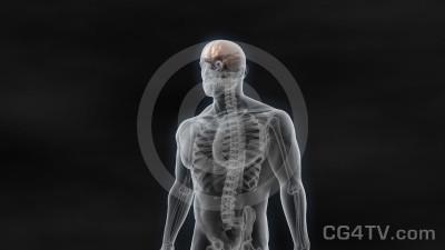Chip inside the Human Brain